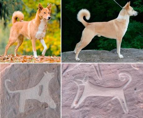 Un misterioso mural de 8.000 años, es la prueba más antigua de la domesticación de perros