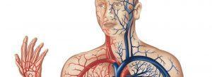 Mala circulación: causas, signos y síntomas, y tratamiento