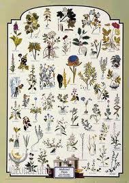 Plantas medicinales según su naturaleza (China)