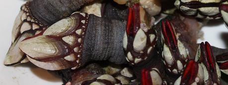 Resultado de imagen de marisco gallego
