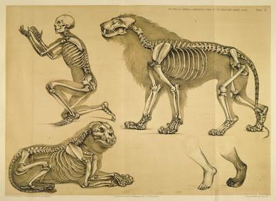 ¿Son los fósiles evidencias de la evolución?