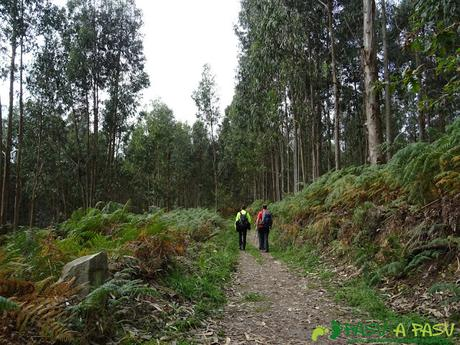 Ruta de los Misterios del Mar: Bosque de eucalipto