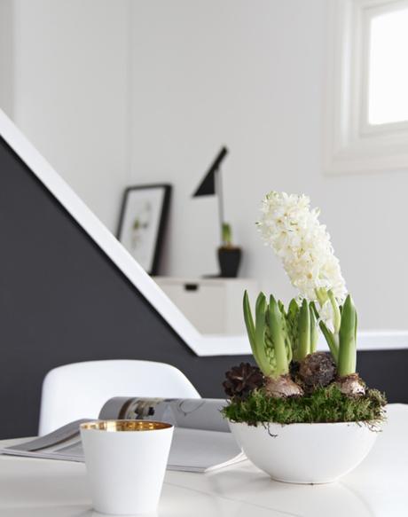 4 Plantas para tu hogar en Navidad