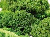 Kale, rica minerales, vitaminas antioxidantes