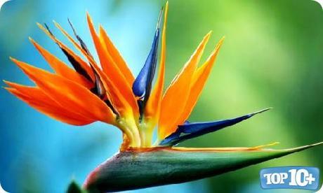 Ave del Paraíso-entre-las-10-flores-mas-hermosas-del-mundo