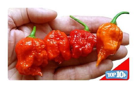 Infinity Chili-entre-las-pimientas-mas-picantes-del-mundo