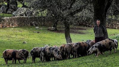 El cerdo más exquisito del mundo
