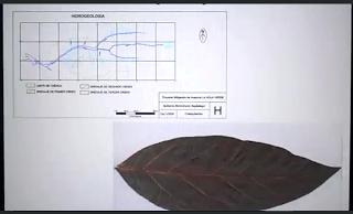 Video: metodo mitigacion huaicos hoja verde
