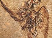 sorprendente legado fósil