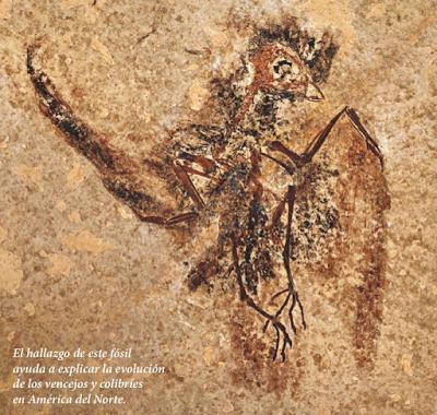 El sorprendente legado de un fósil