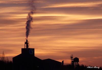 Los animales como testigos de la contaminación