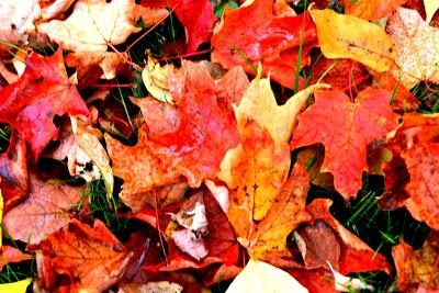 Los colores del otoño