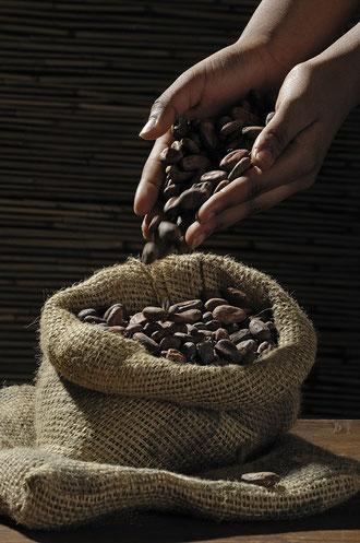 Superalimentos que pueden cambiar tu vida. Cacao