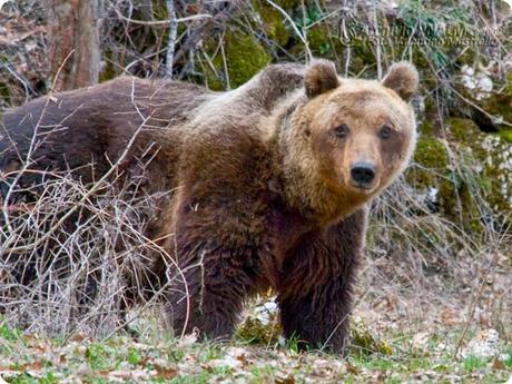 El Parque Nacional de los Abruzos, Lacio y Molise es uno de los parques más antiguos de Italia.