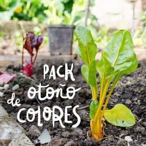 pack de plantel con variedades de colores para otoño invierno