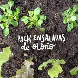 Pack de plantel ensaladas otoño