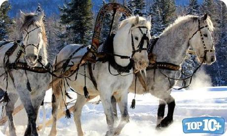 Rusia-entre-los-paises-con-mas-caballos-del-mundo