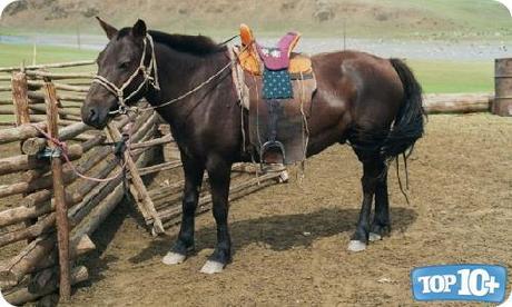 Mongolia-entre-los-paises-con-mas-caballos-del-mundo