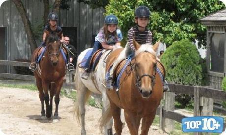 Estados Unidos-entre-los-paises-con-mas-caballos-del-mundo