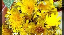 flores de diente de leon