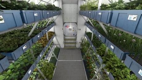 Jardinería espacial: Estudios de vegetales en el espacio