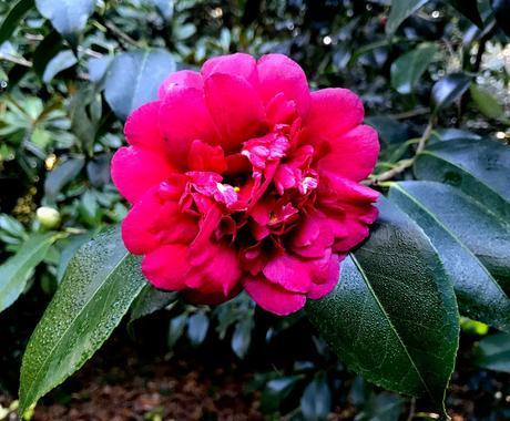 ¡Diciembre en el jardín! December in the garden!
