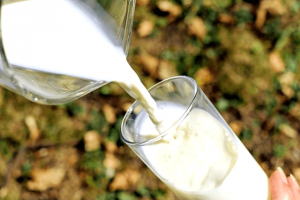 La dieta de la leche