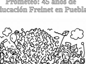Perfil: años educación Freinet Puebla