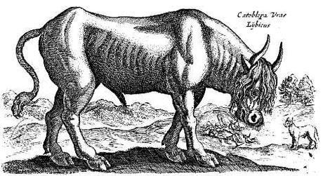Criaturas míticas que resultaron ser reales