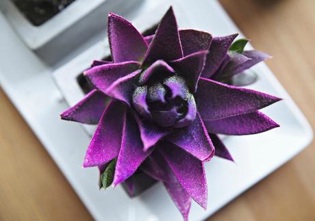 El color del año 2018 se llama Ultra Violet