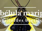 libélula mariposa