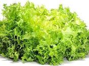 Escarola para nutritivas ensaladas invierno
