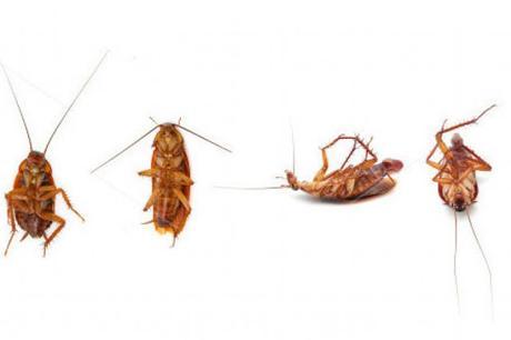 Insólito! La #leche de cucaracha es el #alimento del #futuro