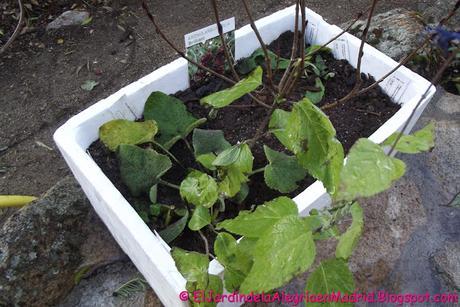 Como conservar las plantas hasta el momento de la plantación