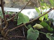 Como conservar plantas hasta momento plantación