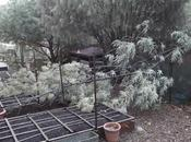 Frío, viento, lluvia...y mimosa dañada