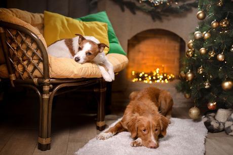 mascotas estrés navidad visitas