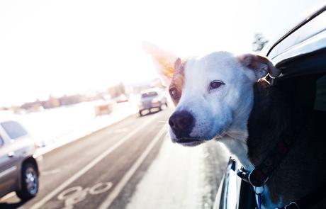 mascotas estrés navidad viaje