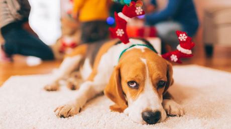 Cómo evitar que la Navidad estrese a tu mascota