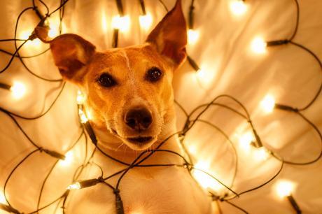 mascotas estrés navidad adornos