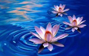 Una vida con hábitos y rutina es una vida de paz y crecimiento