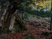 árbol roca