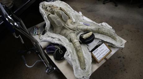 Consiguen #fósil de #mamut en construcción en los Ángeles #EEUU (FOTO)