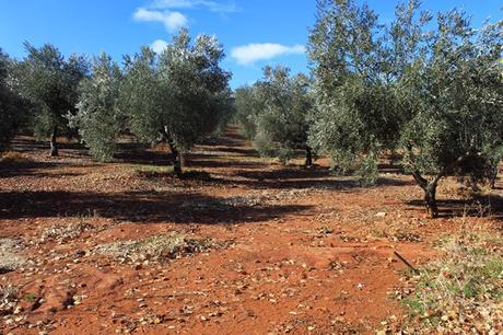 Finca La Pontezuela | Aceites de oliva Virgen Extra