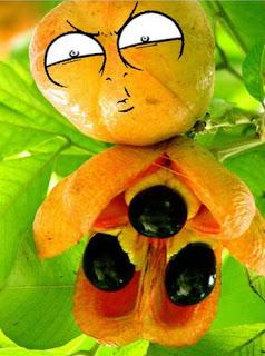 ¿Cuál es la fruta más peligrosa del mundo?