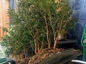 Bosque Buxus Sempervirens: mantenimiento