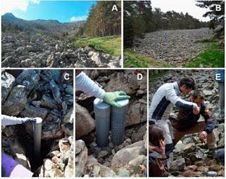 Nuevas especies de colémbolos en el medio subterráneo de España