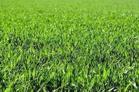 Lo que significa soñar con el verde.