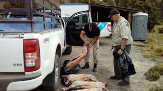 Detectan un cazador con 90 kilos de carne de ciervo