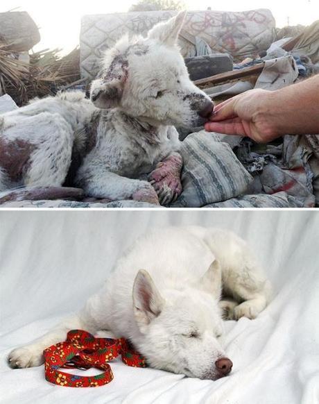perros rescatados, antes y después.